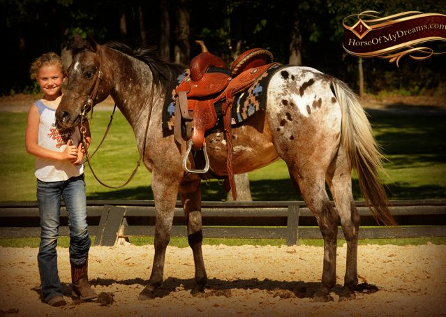 010-GiGi-Appaloosa-Pony-Mare-For-Sale