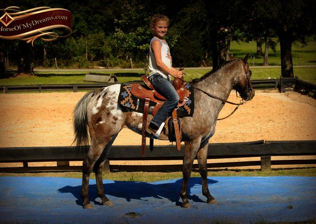 011-GiGi-Appaloosa-Pony-Mare-For-Sale