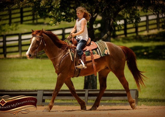 011-Ollie-Sorrel-Quarter-Horse-Gelding-For-Sale