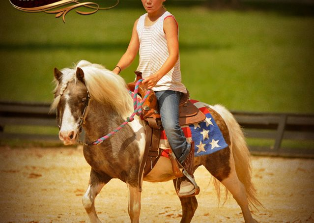 011-Smokey-paint-pony-gelding-for-sale