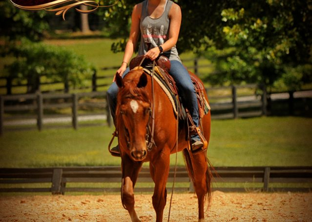 011-Sparkles-Sorrel-AQHA-Mare-For-Sale
