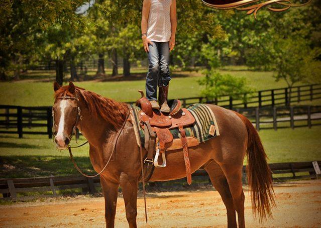 012-Ollie-Sorrel-Quarter-Horse-Gelding-For-Sale