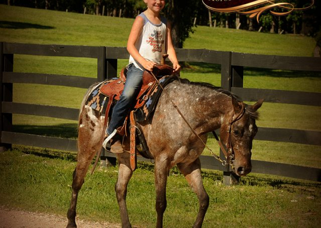 013-GiGi-Appaloosa-Pony-Mare-For-Sale