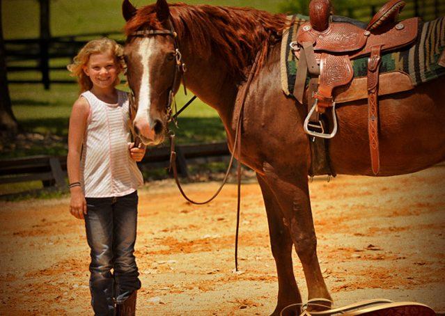 013-Ollie-Sorrel-Quarter-Horse-Gelding-For-Sale