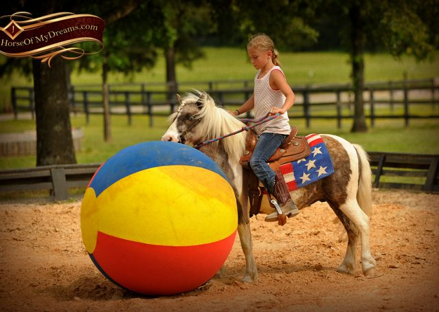 013-Smokey-paint-pony-gelding-for-sale
