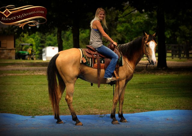 014-Perry-Buckskin-AQHA-Gelding-For-Sale