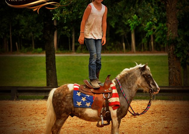 014-Smokey-paint-pony-gelding-for-sale