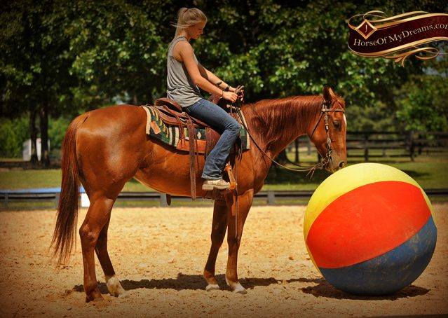 014-Sparkles-Sorrel-AQHA-Mare-For-Sale