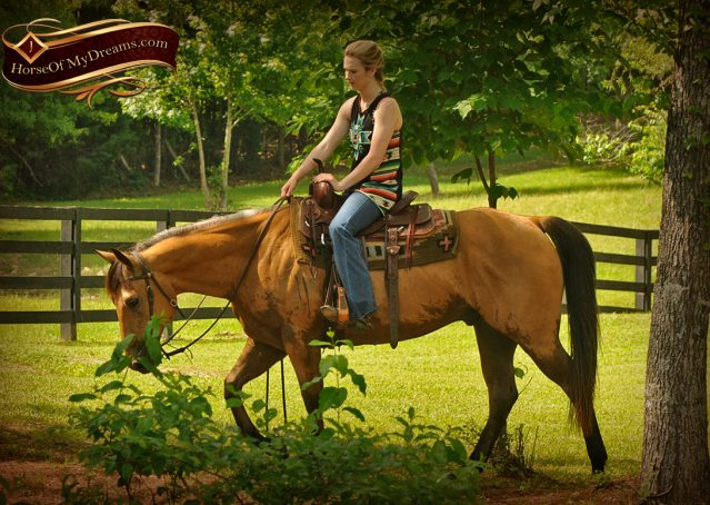 015-Bert-Buckskin-AQHA-Gelding-For-Sale