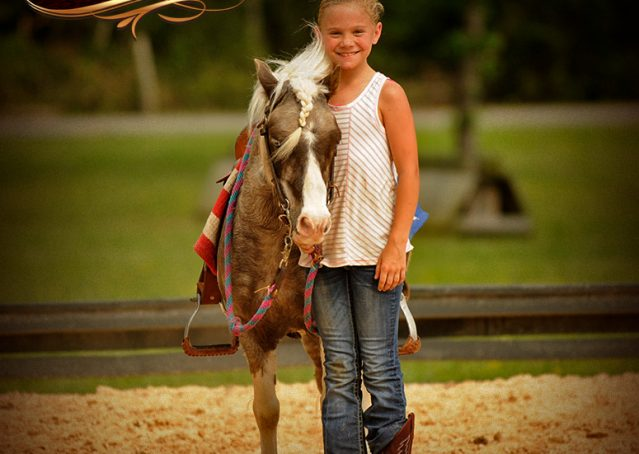 015-Smokey-paint-pony-gelding-for-sale
