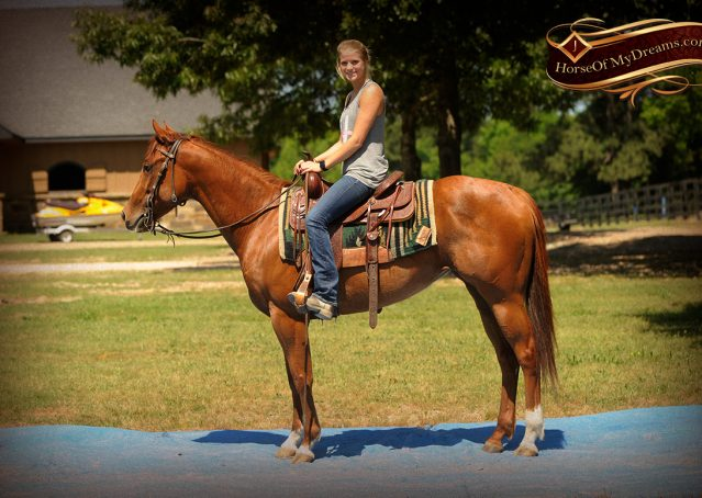 015-Sparkles-Sorrel-AQHA-Mare-For-Sale