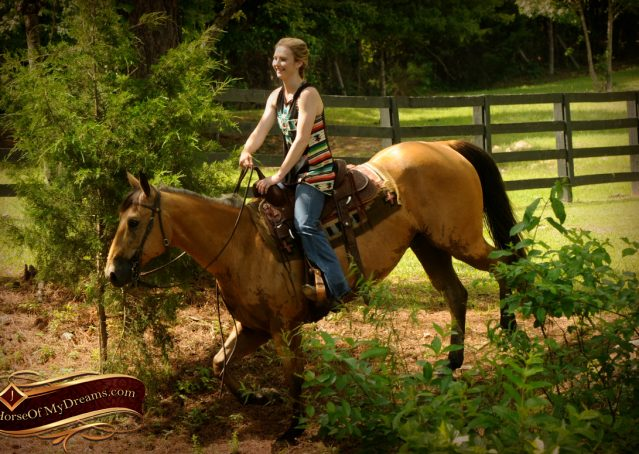 016-Bert-Buckskin-AQHA-Gelding-For-Sale