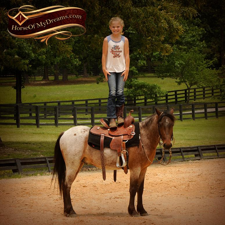 Denver | Horse of My Dreams