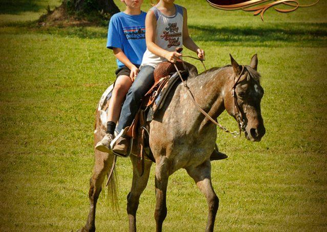 016-GiGi-Appaloosa-Pony-Mare-For-Sale