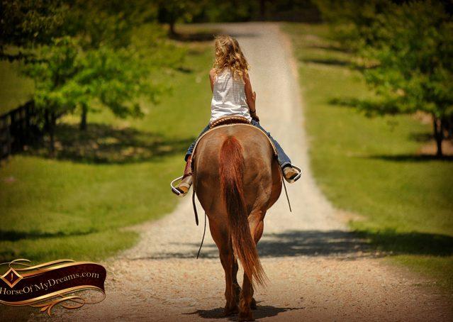 016-Ollie-Sorrel-Quarter-Horse-Gelding-For-Sale