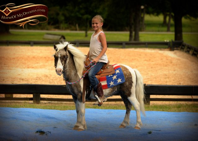 016-Smokey-paint-pony-gelding-for-sale