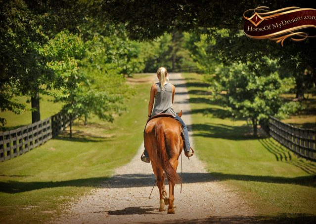 016-Sparkles-Sorrel-AQHA-Mare-For-Sale