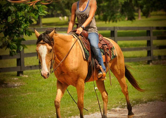 017-Perry-Buckskin-AQHA-Gelding-For-Sale