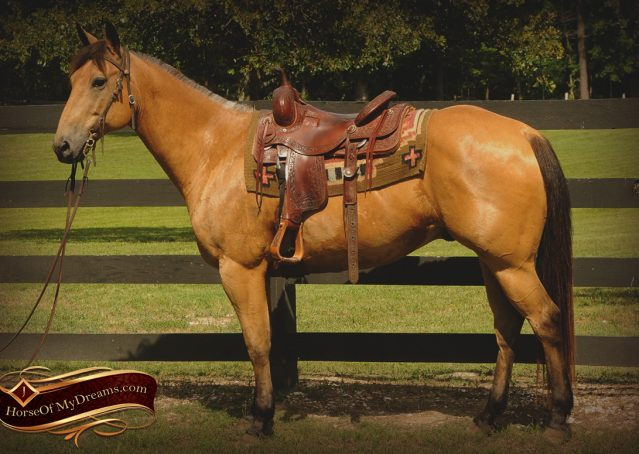 018-Bert-Buckskin-AQHA-Gelding-For-Sale