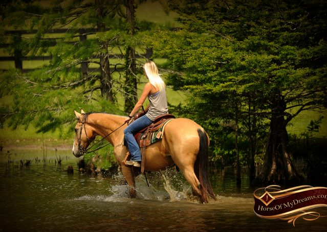 018-Perry-Buckskin-AQHA-Gelding-For-Sale
