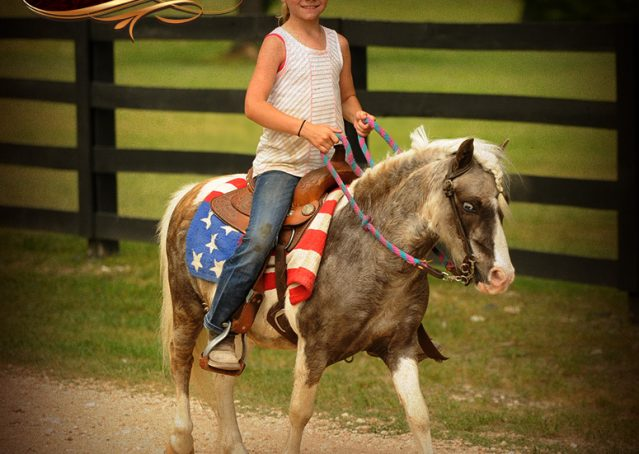 018-Smokey-paint-pony-gelding-for-sale