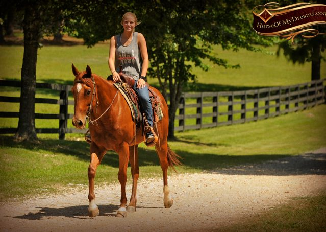 018-Sparkles-Sorrel-AQHA-Mare-For-Sale