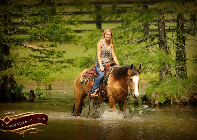 019-Perry-Buckskin-AQHA-Gelding-For-Sale