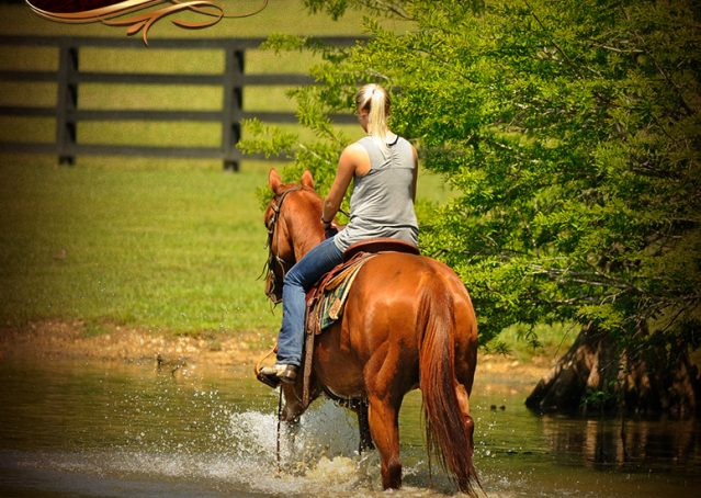 019-Sparkles-Sorrel-AQHA-Mare-For-Sale