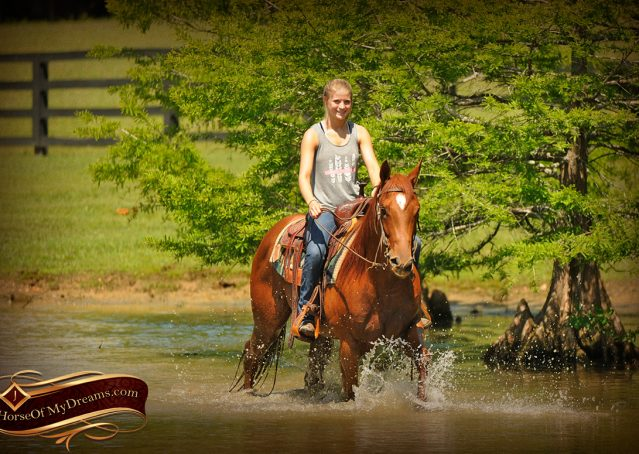 020-Sparkles-Sorrel-AQHA-Mare-For-Sale