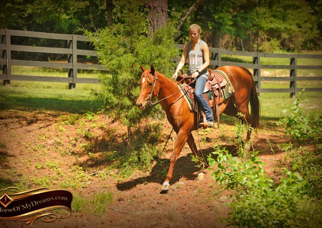 021-Sparkles-Sorrel-AQHA-Mare-For-Sale