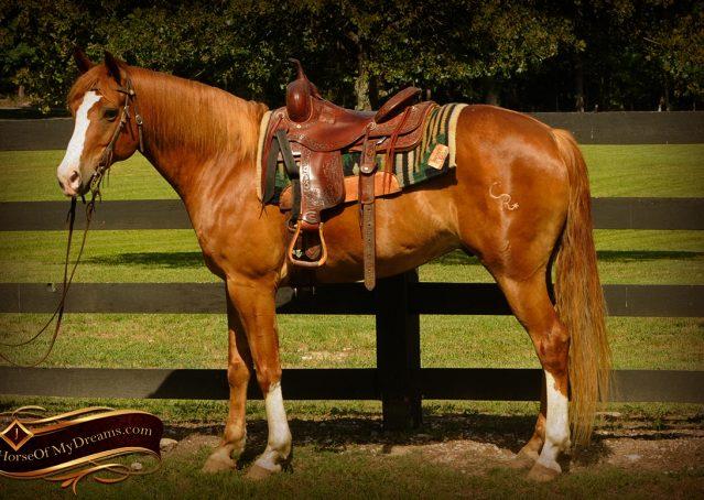 001-Remi-Sorrel-Quarter-Horse_Gelding-For-Sale