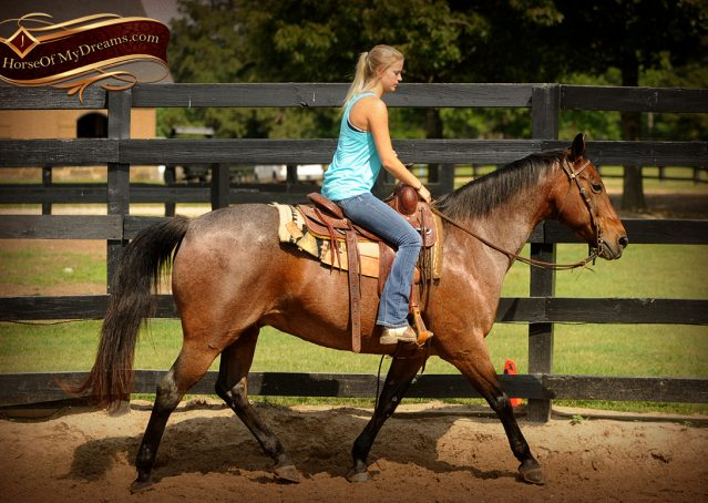 002-Jordan-Bay-roan-Gelding-For-Sale