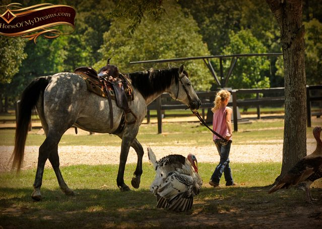 002-Milagro-Gray-AQHA-Gelding-For-Sale