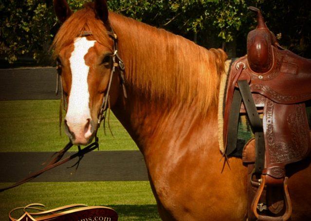 002-Remi-Sorrel-Quarter-Horse_Gelding-For-Sale