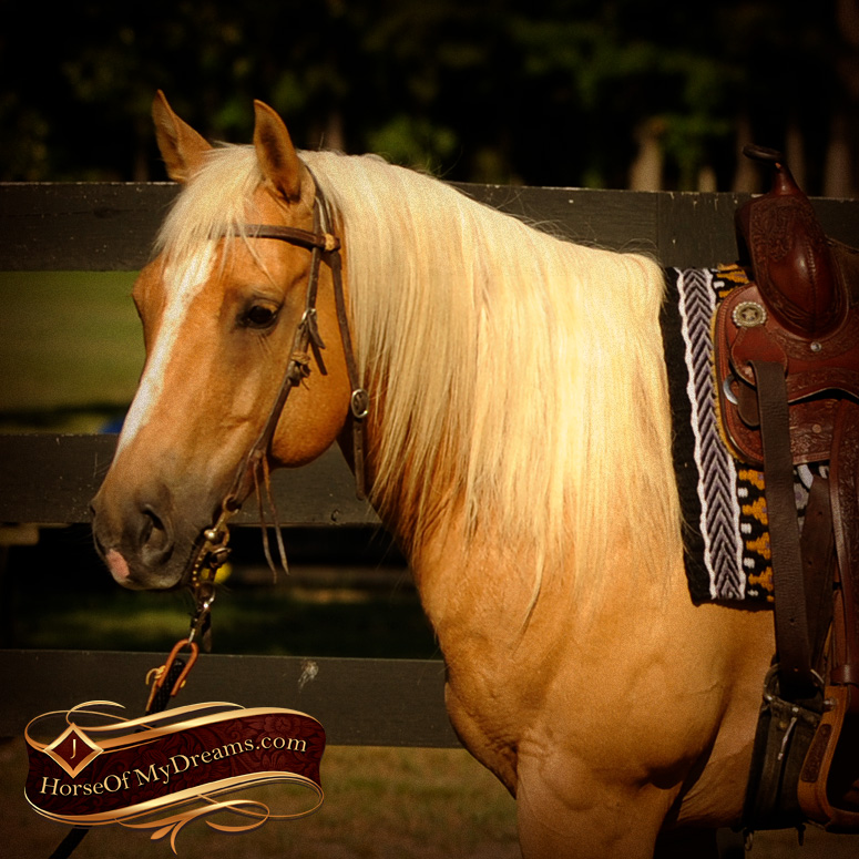 Cowboy Rey