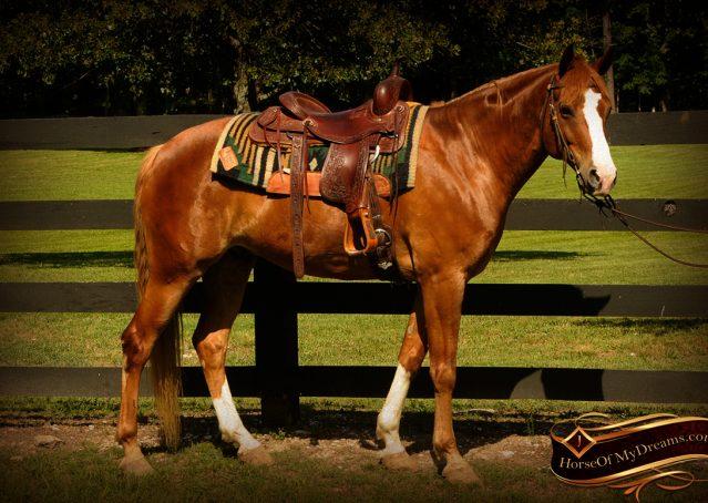 003-Remi-Sorrel-Quarter-Horse_Gelding-For-Sale