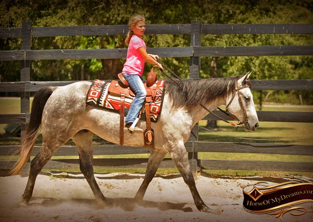 004-Milagro-Gray-AQHA-Gelding-For-Sale