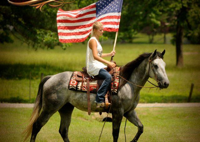 004-Steele-Gray-Quarter-Horse-Gelding-For-Sale
