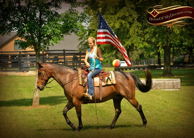 005-Jordan-Bay-roan-Gelding-For-Sale