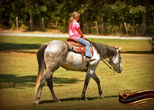 005-Milagro-Gray-AQHA-Gelding-For-Sale