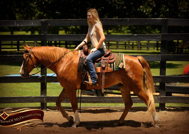 005-Remi-Sorrel-Quarter-Horse_Gelding-For-Sale