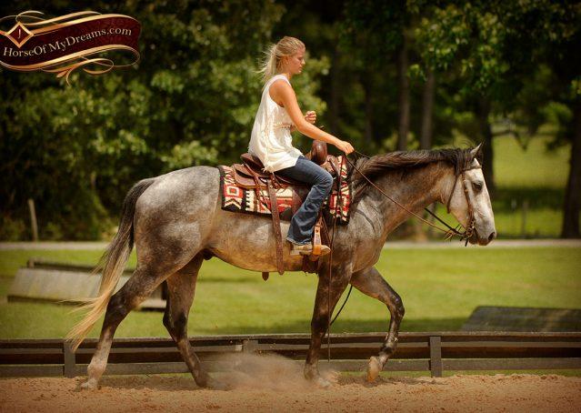 005-Steele-Gray-Quarter-Horse-Gelding-For-Sale