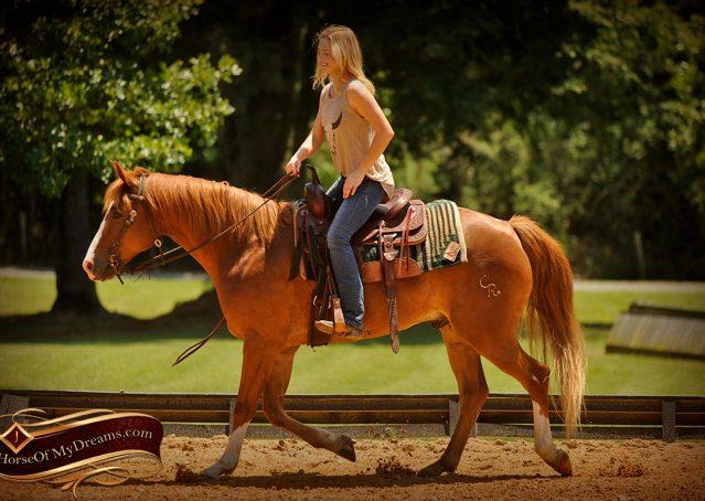 006-Remi-Sorrel-Quarter-Horse_Gelding-For-Sale