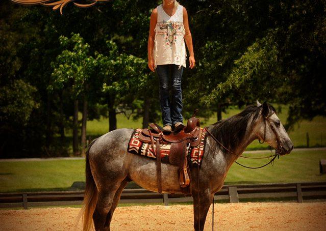 006-Steele-Gray-Quarter-Horse-Gelding-For-Sale