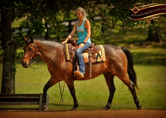 007-Jordan-Bay-roan-Gelding-For-Sale