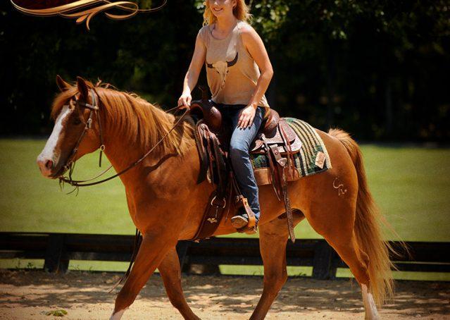 007-Remi-Sorrel-Quarter-Horse_Gelding-For-Sale