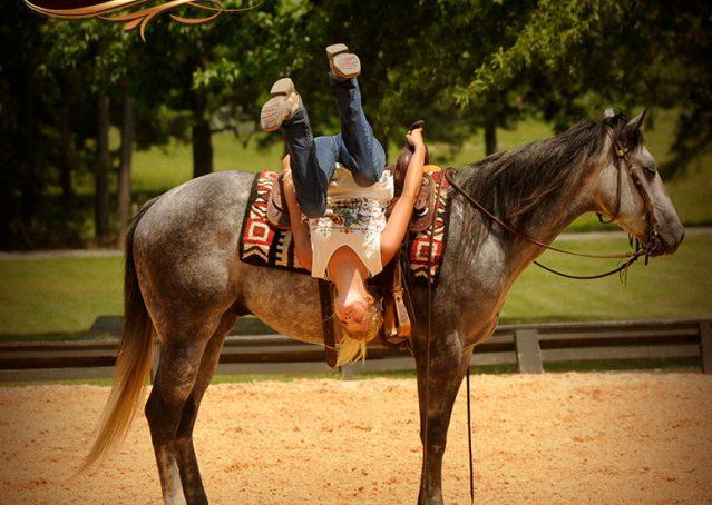 007-Steele-Gray-Quarter-Horse-Gelding-For-Sale