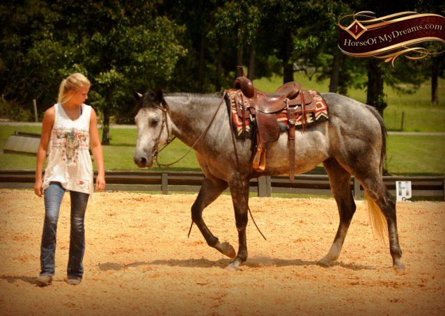 008-Steele-Gray-Quarter-Horse-Gelding-For-Sale