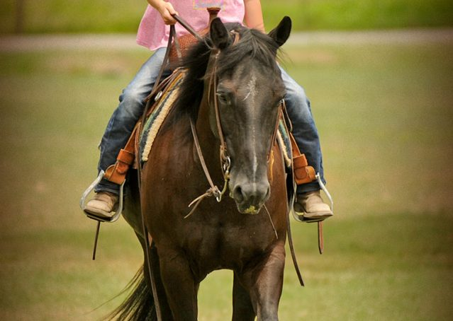 009-Jett-Black-Quarter-Horse-Gelding-For-Sale