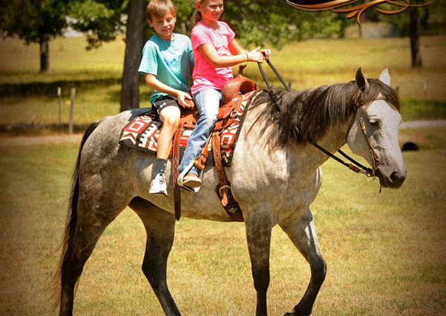 009-Milagro-Gray-AQHA-Gelding-For-Sale